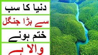 World Biggest Forest in Hindi Urdu | Largest Forest in the World | Informative 3