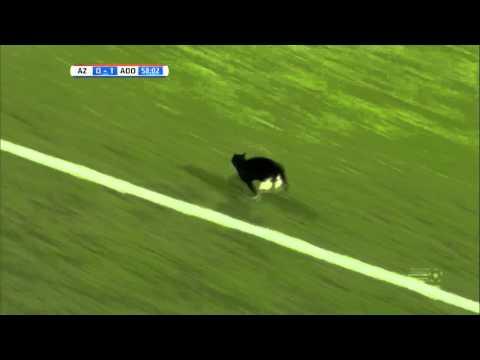 Un Chat Rentre Dans Un Terrain De Foot Au Pays Bas