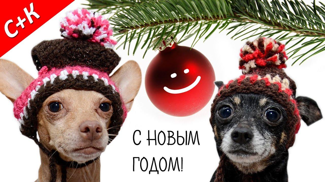Поздравление с новым годом собачников