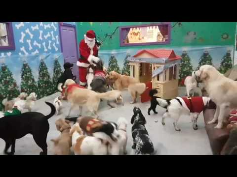 Santa Paws came to visit the doggies