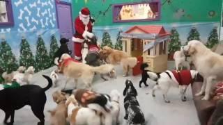 やった!ボクらのとこにもサンタさんがやって来たよ!犬たちにプレゼントを配るサンタクロース