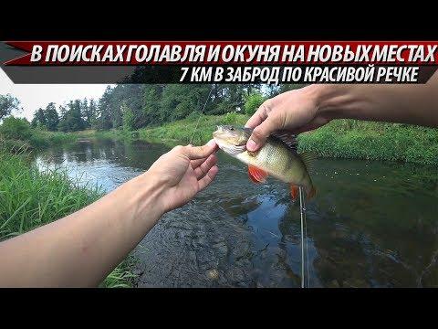 Рыбалка на небольшой красивой речке. Ловля окуня на спиннинг 2019
