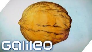 Welcher Aufwand steckt hinter der Walnuss? | Galileo | ProSieben
