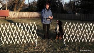 Doorway Manners: Training Your Dog To Wait (video)