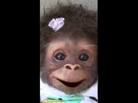 обезьяна поет на армянском 👅👅