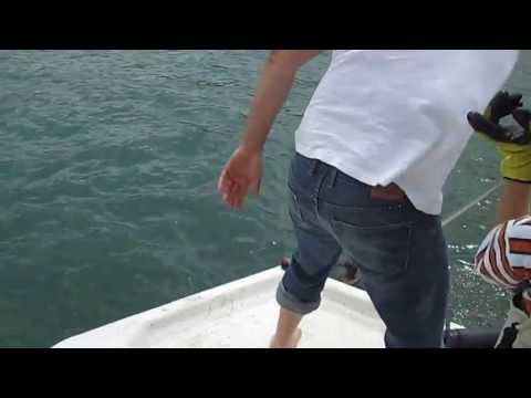 Feeding Gigantic Catfish & Carp at Lake Travis Texas from YouTube · High Definition · Duration:  3 minutes 56 seconds  · 1,000+ views · uploaded on 7/24/2015 · uploaded by megalodon1