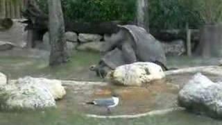 Sex Turtles