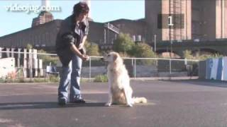 How To Train Your Dog To Be Obedient