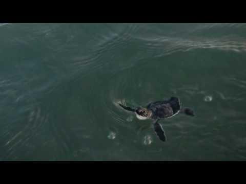 Sea turtle season 2017