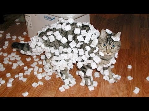 CAT VIDEOS 2018 😻😹 FUNNIEST VIRAL CAT VIDEOS