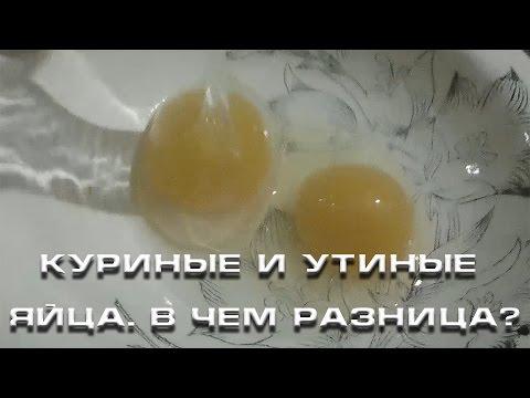 Разница между куриными и перепелиными яйцами