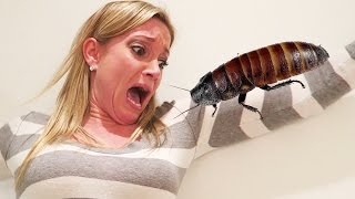 APRIL FOOLS HISSING COCKROACH PRANK!!!