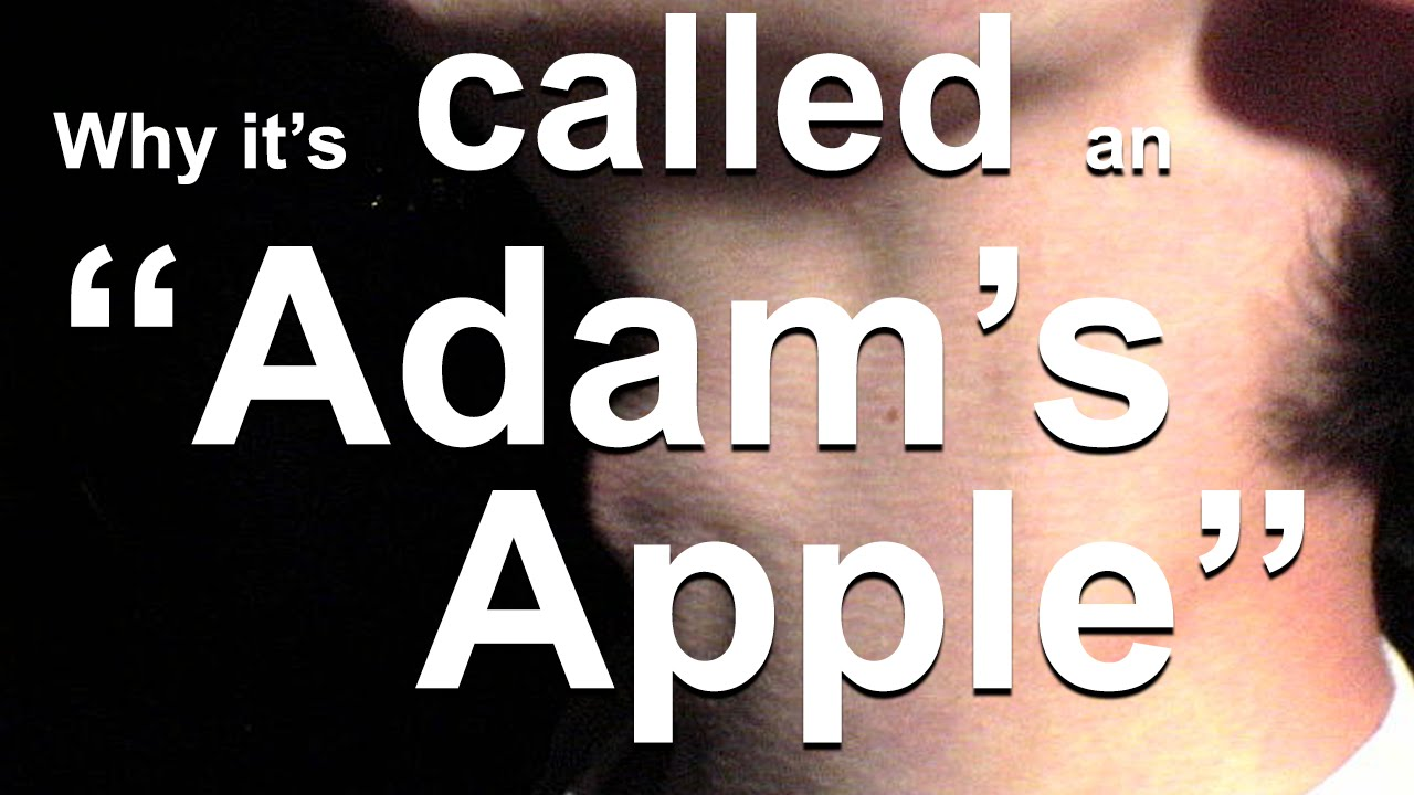 Why the Adam's Apple is Called the Adam's Apple