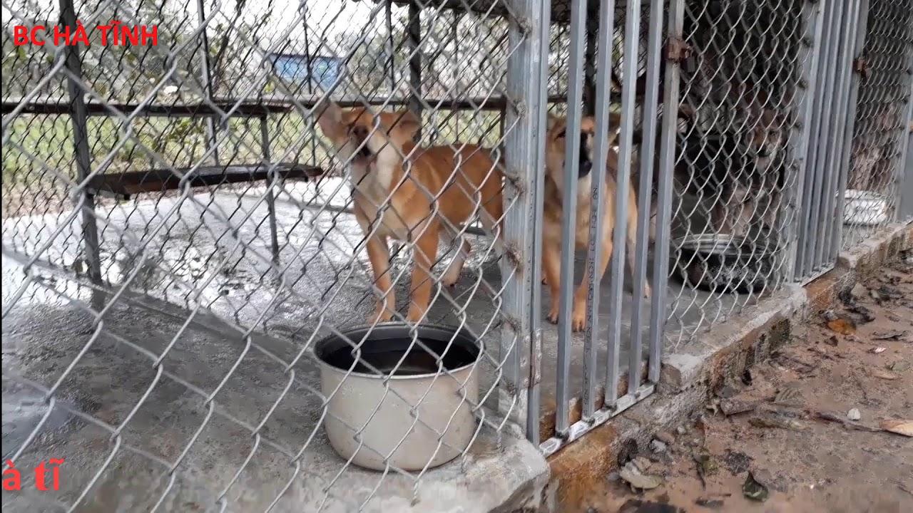 kỹ thuật xây dựng trang trại nuôi chó thịt – bồ câu hà tĩnh – 0977006968