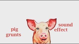 Wenn ein Schwein Grunzt - Sound-Effekt - Animation