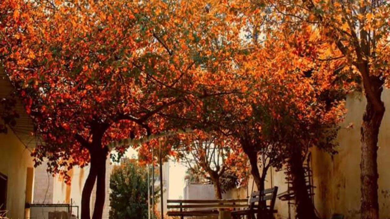 Download Al Balqa Applied University the most beautiful university in Jordan