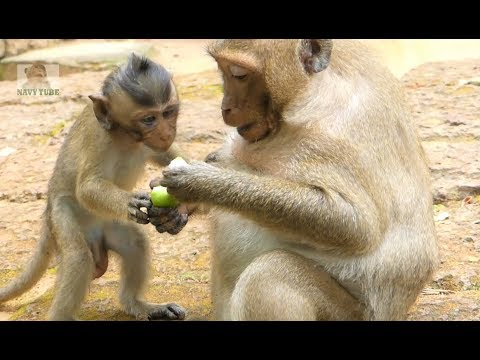 Beautiful family! adorable SP shares the food to Polino, bro comfort Sp When he fell from the rock