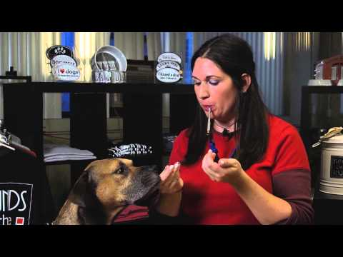 training-tips:-how-to-use-a-silent-dog-whistle-:-dog-training-tips