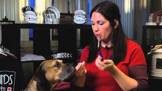 Training Tips: How to Use a Silent Dog Whistle : Dog Training Tips