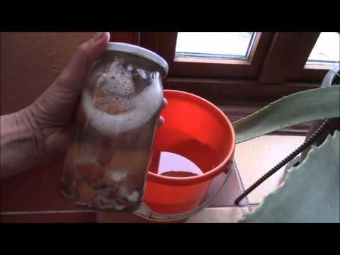 видео: Яичная скорлупа   удобрение для растений.  Как сделать раствор?
