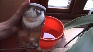 видео Целитель - яичная скорлупа