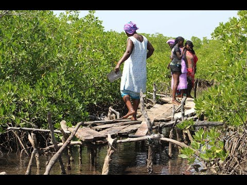 Shrinking Islands, the impact of climate change, Gambia and Senegal