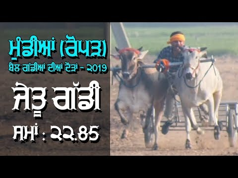 WINNER OXs PAIR | Time : 22.85 / 1100 Feet Distance | at MUNDIAN (Roper) OX RACES - 2019 | MALWA TV