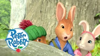 Peter Rabbit - Meeting all the Rabbits and Friends  Cartoons for Kids