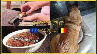 VLOG  ENG 한달동안 유럽여행 벨기에 2편 한식 …
