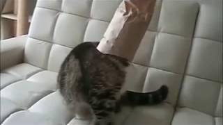 смешная подборка с кошками, озвучка - крылатые выражения из фильмов