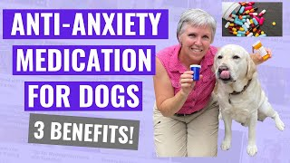 AntiAnxiety Medication for Dogs  3 Benefits!
