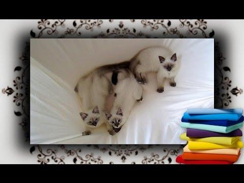 DIY 😻 Tisch Hängematte aus Spannbettlaken für Katzen | hammock for cats from YouTube · Duration:  4 minutes 48 seconds