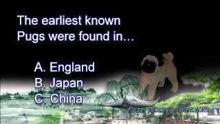 Pug Animal Facts Quiz