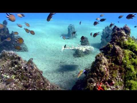 Canary Island, Lanzarote, Diving