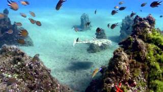 Canary Island, Lanzarote, Diving