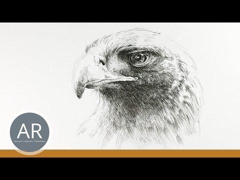Faultier Zeichnen Tiere Malen