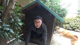 秋田犬の家を訪問しました!