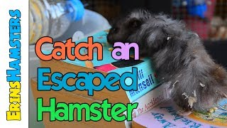 CATCH AN ESCAPED HAMSTER | Bucket Trap Tutorial