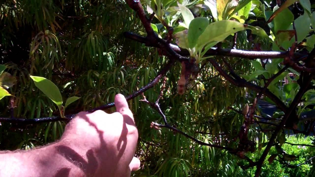 156 Magnolia Scale Youtube