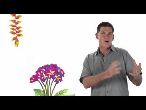 Bees! - Dinosaur Train - The Jim Henson Company