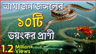 10 Dangerous Strange Animals Found In Amazon Jungle In Bangla | Amazon Rainforest In Bangla