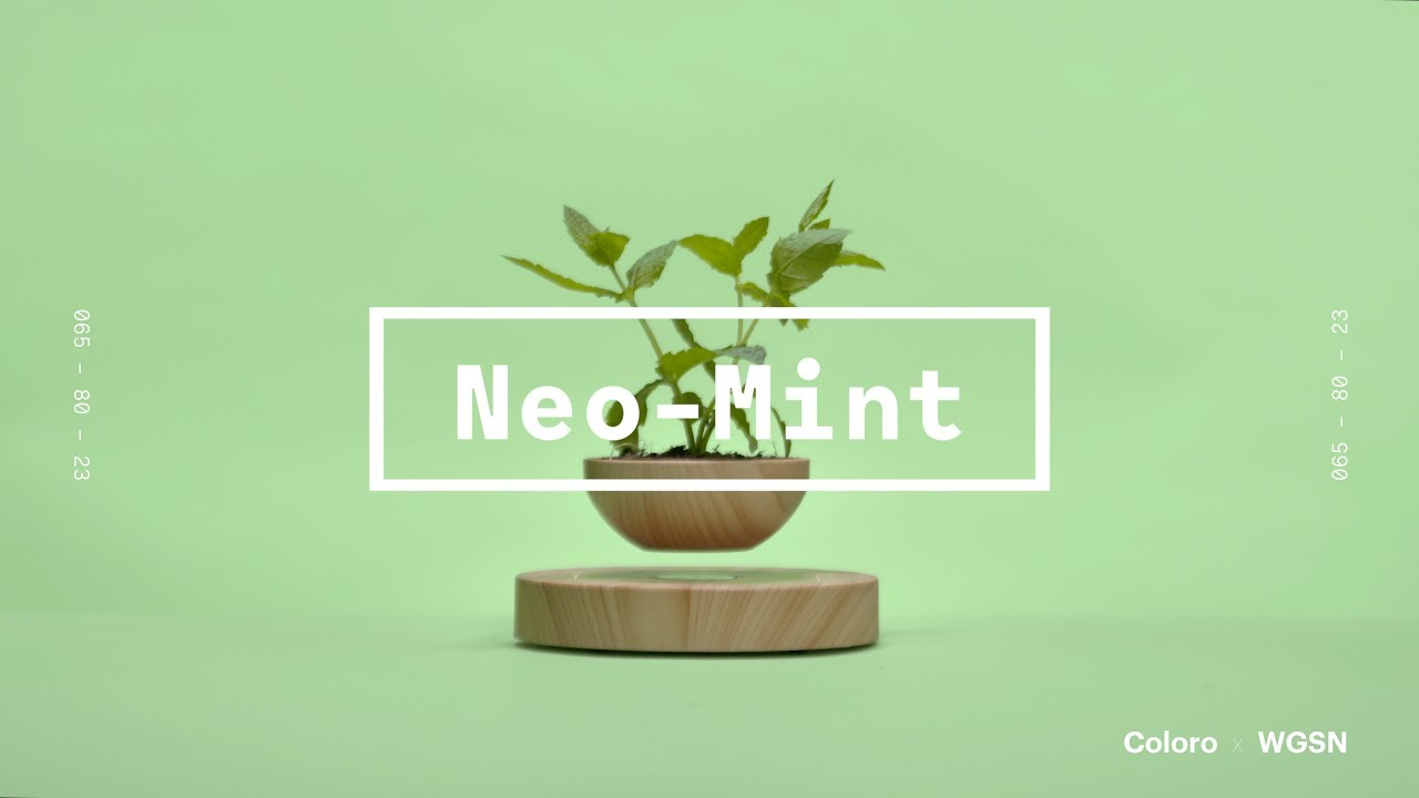 Image result for neo mint wgsn