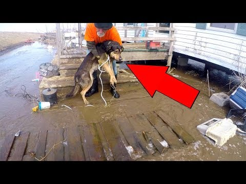 RESCUING 30+ Dogs from DANGEROUS Flood (EMOTIONAL)