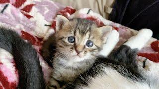 おっぱいを探していたらお尻にたどり着いちゃった子猫
