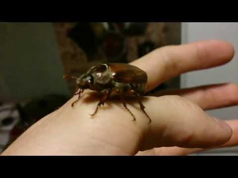 Майские жуки)))
