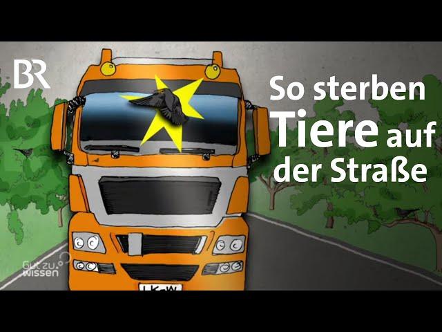 Schlachtfeld Straße: So viele Tiere sterben durch Autos in Deutschland | Gut zu wissen | BR