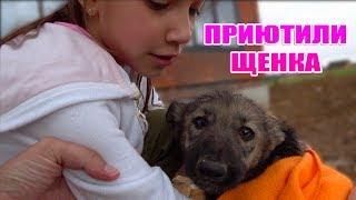 Приютили Бездомного Щенка Влог / Вики Шоу