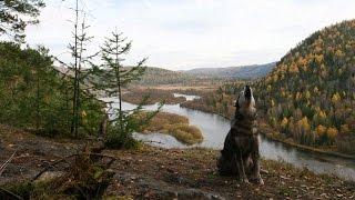Дикая природа России - Cибирь