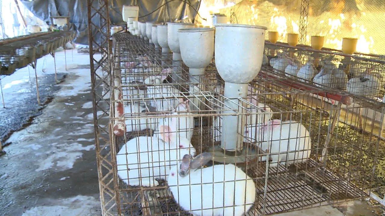 La Cría De Conejos Crece En Mendoza Youtube