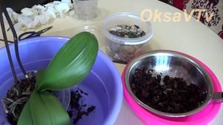 Уход за орхидей Phalaenopsis: пересадка орхидеи. Orchids Phalaenopsis: transplanting orchids(Экстренная пересадка орхидеи. Как пересадить цветущую орхидею. Делюсь своим опытом. Caring for orchids Phalaenopsis: transplan..., 2015-06-12T03:19:55.000Z)